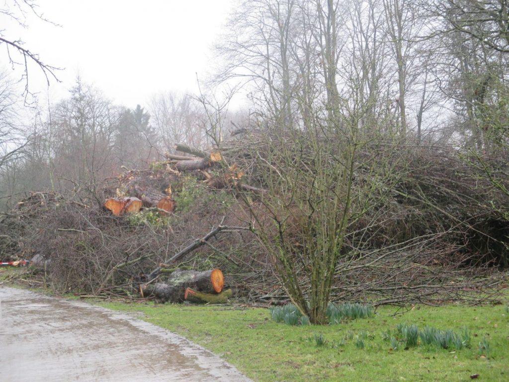 Holzhaufen (Foto: Gabriele Deppe)