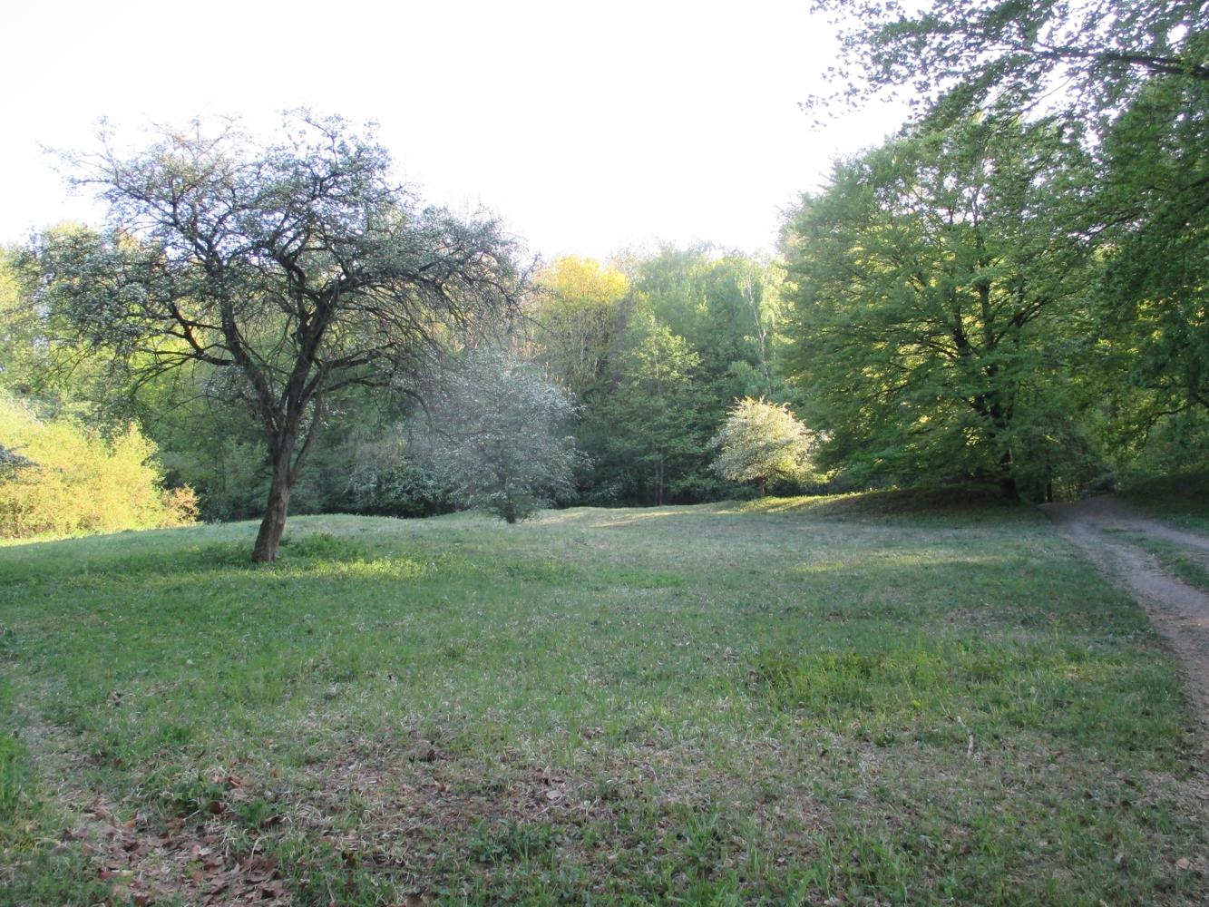 VNU - Naturschutzgebiet Mackenberg - Gabriele Deppe - 26.04.2020